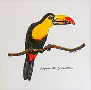 Plexiglass Painting Posters - Rainbow Toucan Poster by Vincent von Frese