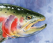 Fly Fishing Art Print Posters - Rainbow Trout Poster by David Rogers