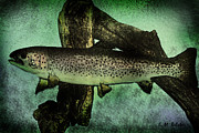 Rainbow Trout Mixed Media Posters - Rainbow Trout Poster by Erica Belcher