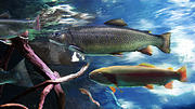 Trout Digital Art - Rainbow Trout by Lisa Redfern