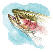 Flyfishing Painting Prints - Rainbow Trout Study Print by JQ Licensing