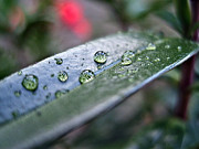 Spate Photos - Raindrops by Nina Ficur Feenan
