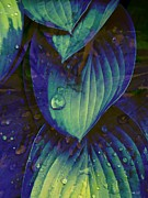 Rene Crystal - Raindrops On Hosta