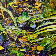 Jungle Reliefs Metal Prints - Rainforest Floor 2 Metal Print by Sue Burickson