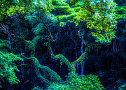 Waimea Falls Prints - Rainforest in Waimea Valley Print by Lisa Cortez