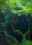 Waimea Falls Prints - Rainforest in Waimea Valley Too Print by Lisa Cortez