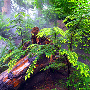 Rainforest Park In Vancouver British Columbia Print by Carol  Lux Photography