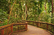 Rainforest Walkway Print by Bob and Nancy Kendrick
