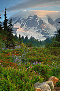 Mt Rainier Stream Framed Prints - Rainier Dawn Framed Print by Jim Chamberlain