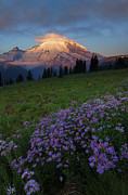 Mt Rainier Prints - Rainier Morning Cap Print by Mike  Dawson