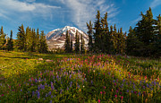 Northwest Art - Rainier Peaceful Wildflower Meadows by Mike Reid