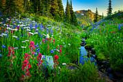 Inge Johnsson - Rainier Wildflower Creek