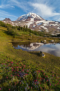 Northwest Art - Rainier Wildflower Meadows Reflection by Mike Reid