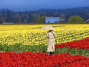 Skagit Digital Art - Raining in The Tulip Fields by John Parks