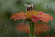 Kathy Rinker - Rainy Day Bee