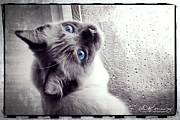 Kitten Prints Posters - Rainy day blues Poster by Darlene Konieczny