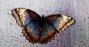 Omaha Ne Photos - Rainy Day Butterfly by Elizabeth Winter