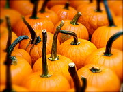 Rainy Day Photo Originals - Rainy Day Pumpkins by Ira Shander