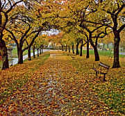 Park Benches Photos - Rainy Path by Maria Janicki