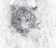 White Tiger Mixed Media - Rajah by Joelle Bhullar