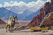 Ram-eastern Sierra Print by Paul Krapf