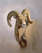 Ram Portrait Print by Paul Krapf