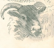 Mike Jory - Ram with horns sketch