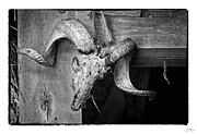 Grunge Photo Framed Prints - Rams Head - Art Unexpected Framed Print by Tom Mc Nemar