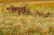 Texas Wild Flowers Posters - Ranch and Wildflowers and Old Farm Implement Poster by Andrew McInnes