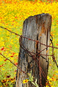 Texas Wild Flowers Posters - Ranch Wildflowers and Fencepost Poster by Andrew McInnes