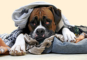 Boxer Dog Art Print Prints - Ranger Danger Fresh Print by Stephanie McDowell
