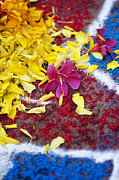 Religious Art Photos - Rangoli festival art with flower petals by Tim Gainey