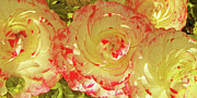 Vivid Digital Art - Ranunculus Group by Ben and Raisa Gertsberg