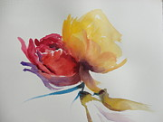 Ranunculus Paintings - Ranunculus by Sri Rao