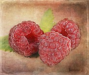 Raspberry Digital Art - Raspberries  by Barbara Orenya