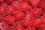 Red Fruit Photos - Raspberry Red by Karon Melillo DeVega