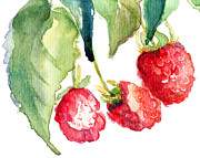 Raspberry Paintings - Raspberry by Regina Jershova