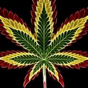 Rasta Marijuana Print by Adam Romanowicz