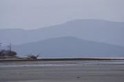 Marilyn Wilson - Rathtrevor Beach on Vancouver Island
