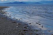 Marilyn Wilson - Rathtrevor Beach Waves