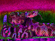 Rattlesnake 20130204m80 Print by Wingsdomain Art and Photography