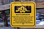 Rattlesnakes Print by Susan Leggett
