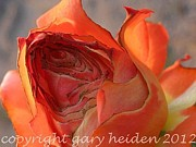 Gary Heiden - Ravaged Rose