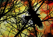 Bird Watching Prints - Raven Print by Bob Orsillo