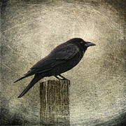 Raven Framed Prints - Raven Framed Print by Elena Nosyreva