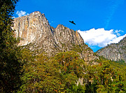 Raven Flying Over Yosemite Valley In Yosemite Np-ca Print by Ruth Hager