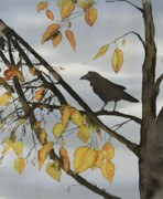 Animals Tapestries - Textiles Prints - Raven In Birch Print by Carolyn Doe