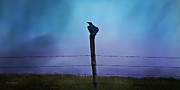 Theresa Leigh Photography Posters - Raven In The Rain Poster by Theresa Tahara
