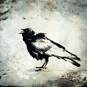 Corvid Prints - Raven on Blue Print by Carol Leigh