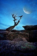 Moonlit Night Photos - Raven on Twisted Tree with Moon by Jill Battaglia